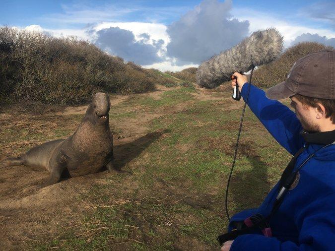 Изследователите са имали възможност да приближат тюлените и да запишат звуци. Снимка:  C. Casey