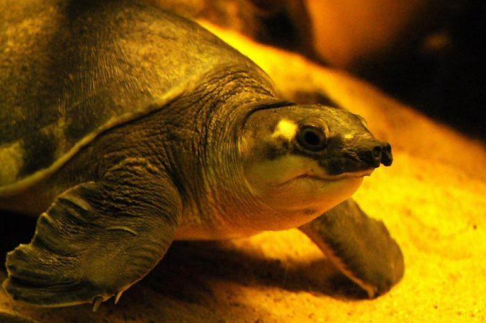 """Изследователи откриват още един вид костенурки, които могат да """"говорят"""""""