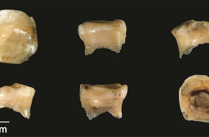 Фосилен зъб връща назад историята на мистериозен неандерталски родственик