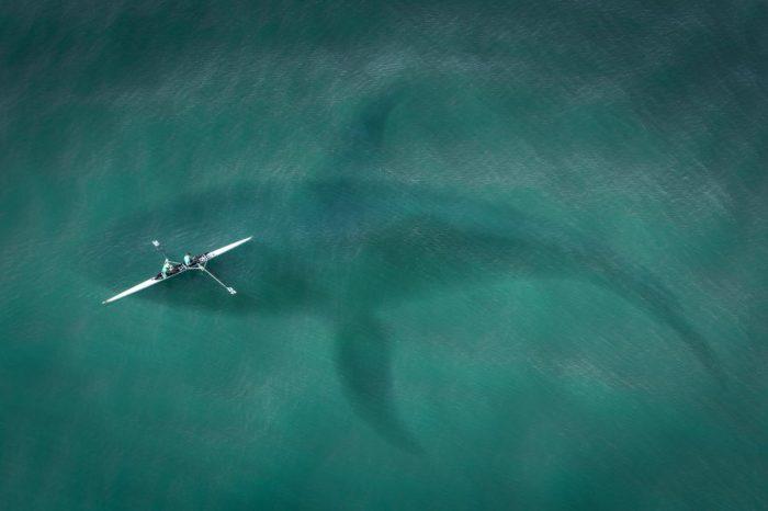 Близо една трета от океанските животни са загинали преди 2.6 милиона години