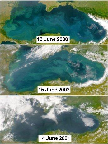 """фиг. 6. Цветни сателитни изображения от SeaWIFS на Черно море на (а) 13 юни 2000 (горе), (b) 15 юни 2002 (средата), (c) 4 юни 2001 (най-долу). """"Тюркоазените завъртулки"""" показват присъствието на коколити (а и b). Различният цвят на най-долното изображение (c) отговаря на видимия от сателит цвят на морето при малко количество коколити. Източник: http://www.ims.metu.edu.tr/cv/oguz/ehux.htm."""