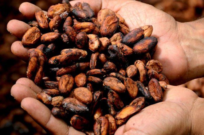 Какаото и шоколадът не са само лакомства – добри са за мозъка