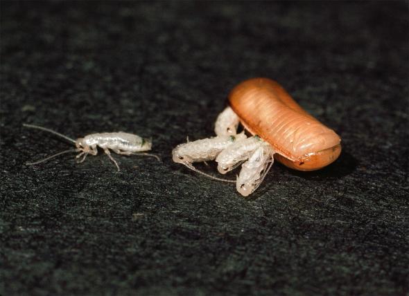Хлебарки. Credit: Bates Littlehales, National Geographic