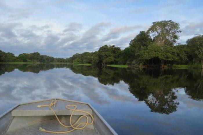 Дърветата в Амазония произвеждат дъжд