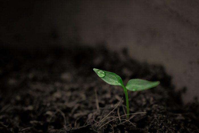 Руски учени създадоха почва, в която дърветата растат по-бързо