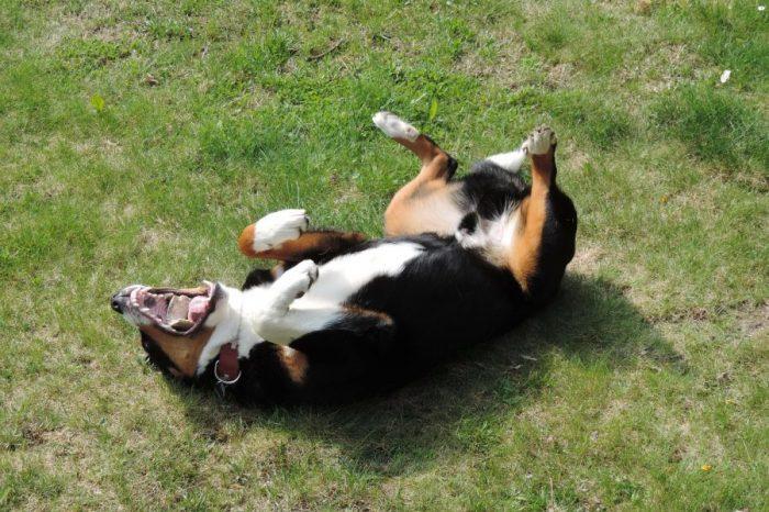 Защо кучетата се въргалят в миризливи изпражнения