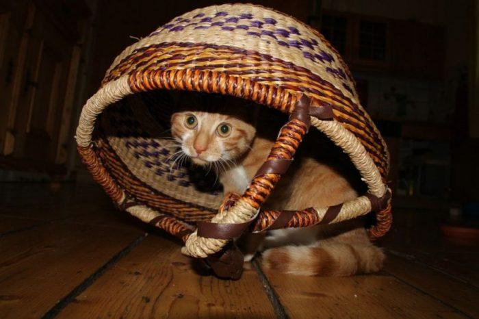 [АУДИО] Мъркат ли котките, когато няма хора около тях
