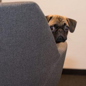 Кучетата изглежда наистина искат да комуникиратс хората. Те стават по-изразителни, когато ги гледате.