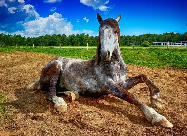 [АУДИО]  Конете разчитат езика на тялото ни, дори когато не ни познават