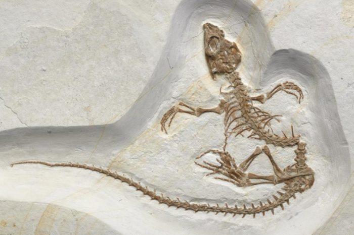 Наскоро открит фосил показва прехода на влечуго от живот на сушата към живот във водата