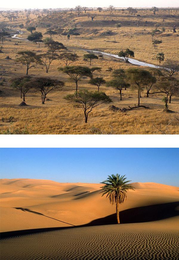Фиг. 2. Пустинята Сахара (ляво) и суха савана в Африка (дясно).