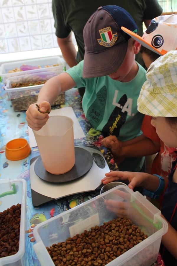 Малките гледачи подготвят храната за животните.