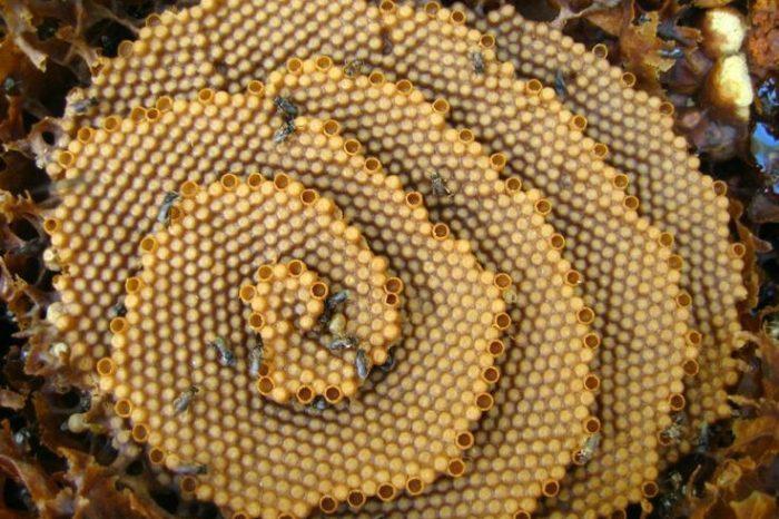 Спираловидните пчелни пити