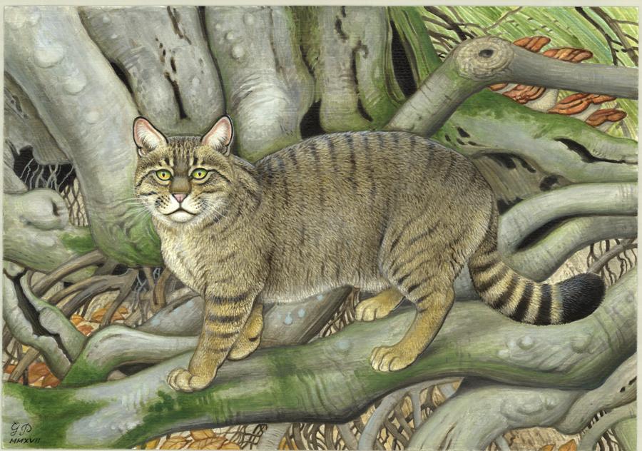 1.Георги Пчеларов. Дървото – Европейска дива котка (Felis silvestris). Акрил върху картон. 2017 г.