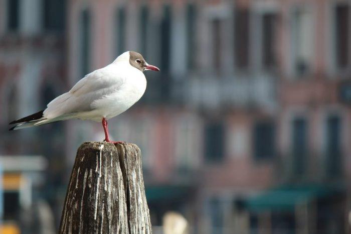 Международна конференция Biodiver-City: Подобряване на биоразнообразието и екосистемните услуги в градска среда за по-устойчиви градове