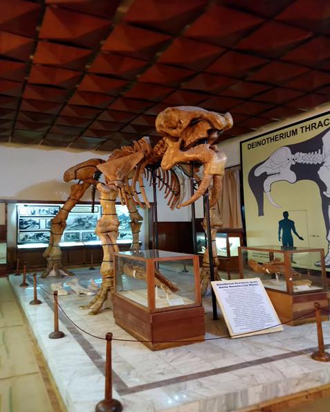 Oтливката на скелета в Палеонтологичния музей в Асеновград