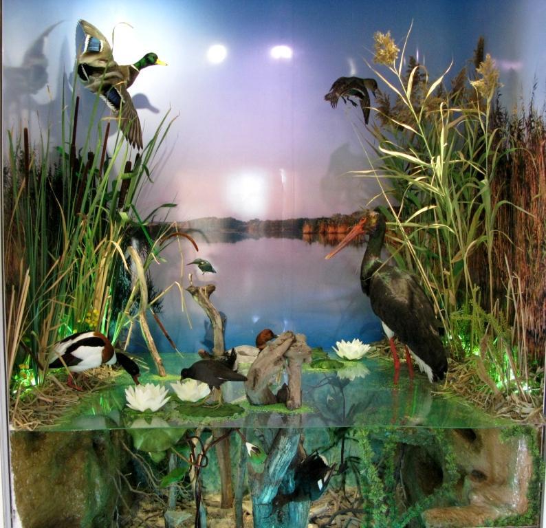Обща изглед на диорамата Крайбрежно езеро. Снимка: Природонаучен музей, Варна