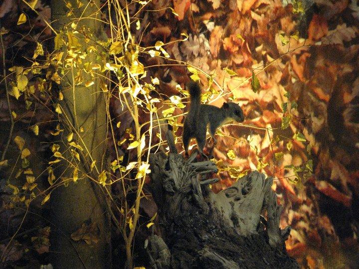 Детайл от горската диорама. Снимка: Природонаучен музей, Варна