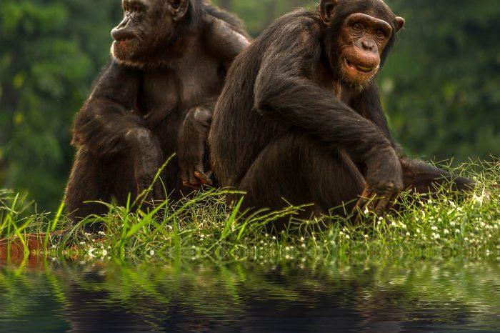 [ПОДКАСТ] REFRESH Voices - 1 място | Маймуните бонобо също се нуждаят от очила