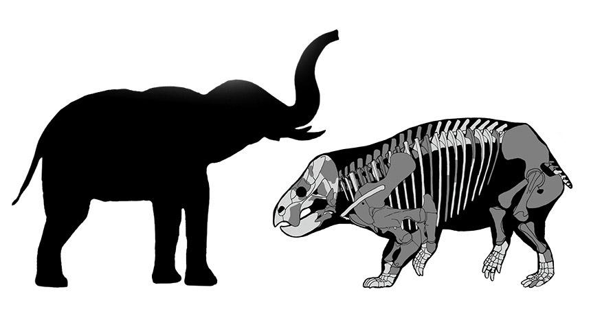 Солидно тревопасно: Нов вид растителноядно създание, живяло през Късния Триас имало размерите на съвременен слон и било значително по-едро от тогавашните си роднини. Credit: Thomasz Sulej and Grzegorz Niedzwiedzk