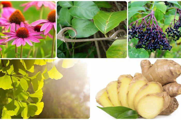Пет билки за силна имунна система