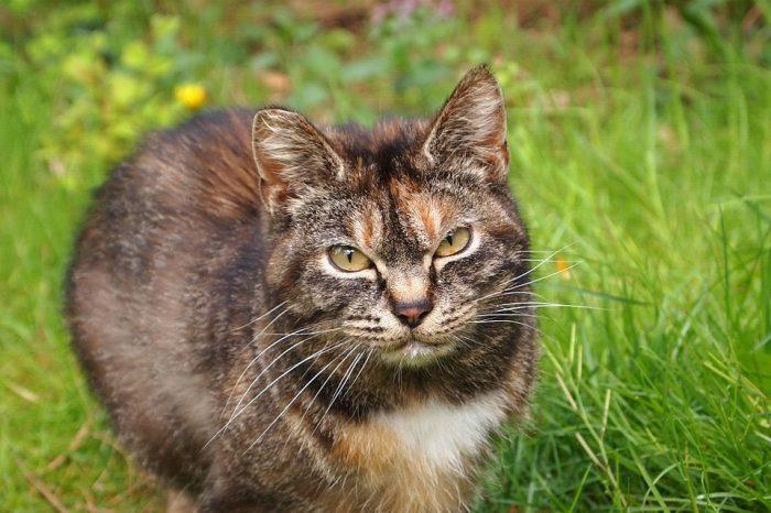 Котките в Австралия убиват над 2 милиарда диви животни всяка година