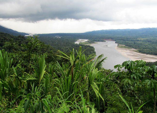 Най-малката в света изкопаема маймунка e открита в джунглата на Амазонка