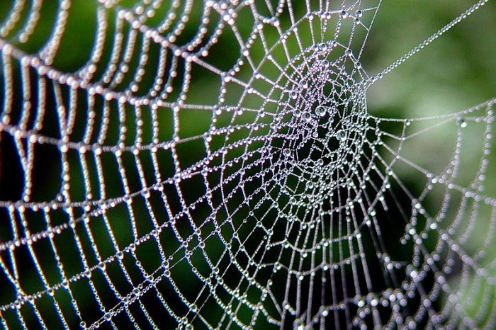 [АУДИО] Древен роднина на паяците подсказва как е започнало плетенето на паяжини