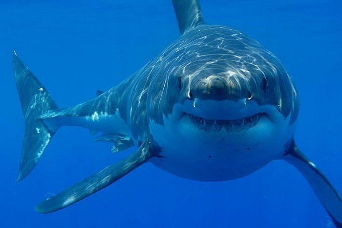 """""""Горещите точки на акулите"""" в световен мащаб са застрашени от прекомерен улов"""