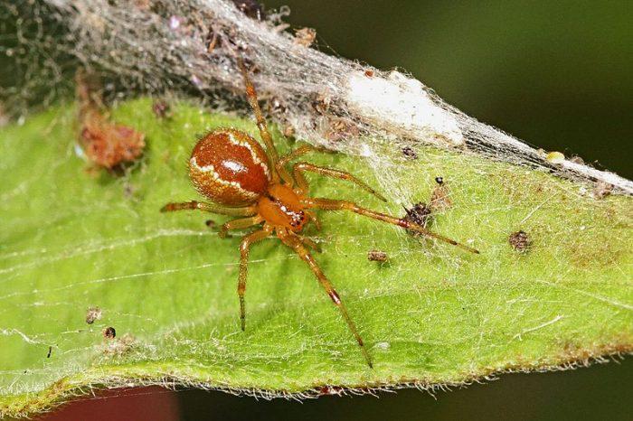 Ураганите задействат еволюцията на по-агресивните паяци