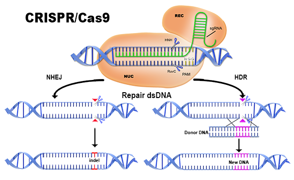 [АУДИО] CRISPR Cas9 Революция в генното инженерство