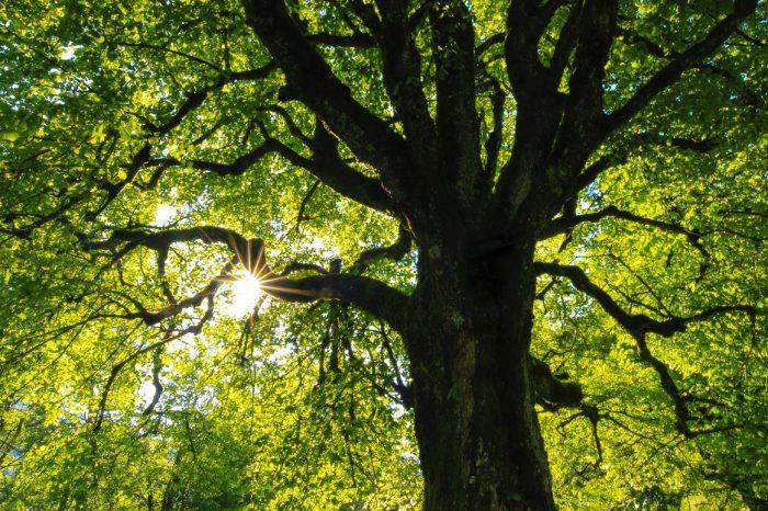 [АУДИО] Градският живот кара дърветата да растат бързо, но да умират млади