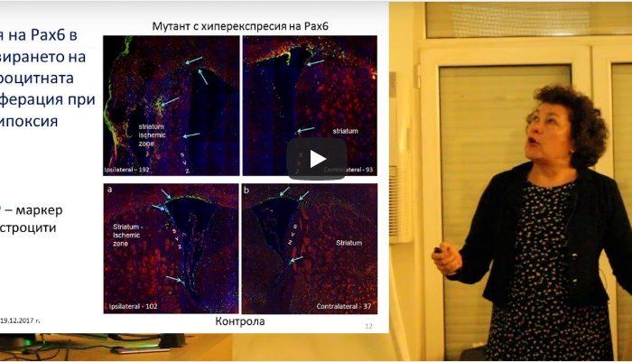 Проект: Постисхемична невропротекция: роля на грелина и транскрипционния фактор Pax6