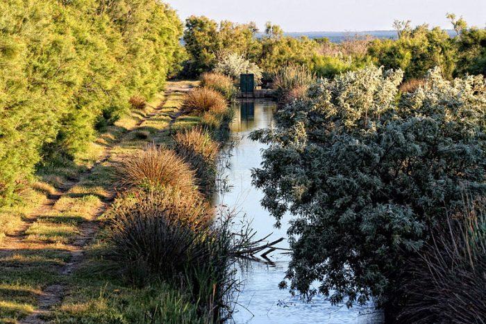 Съществена промяна в биоразнообразието на една от най-големите средиземноморски влажни зони