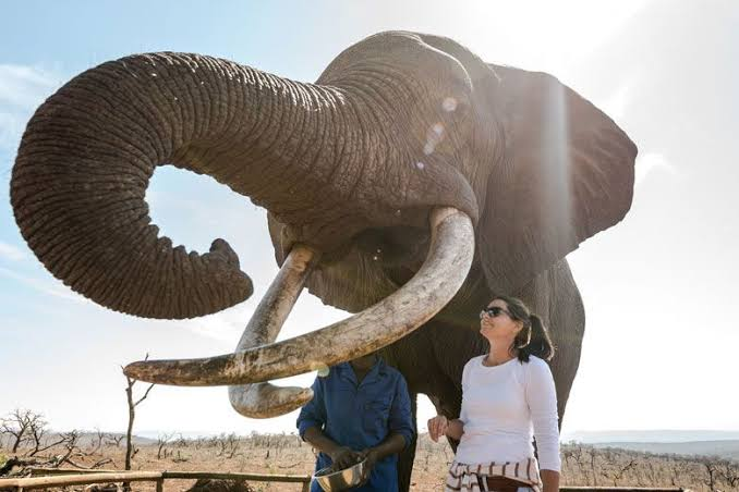 Южна Африка иска да забрани използването на защитени диви животни в туризма