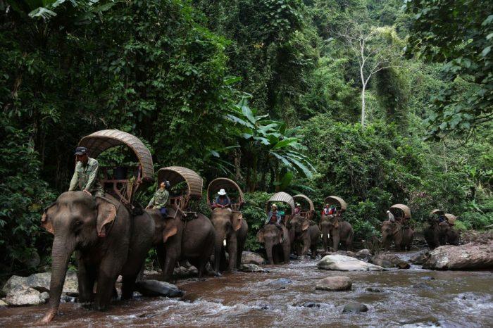 Изчезват ли слоновете в Лаос