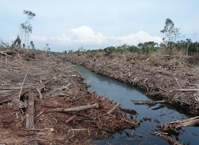 Подготовката на земята за добив на палмово масло причинява най-много щети на климата