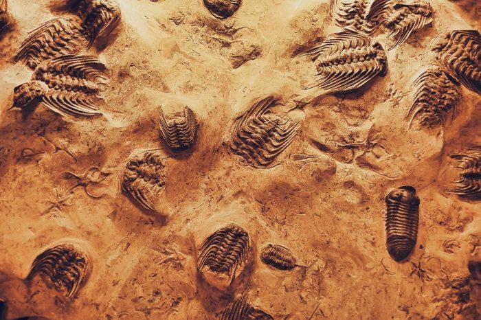 Суперкомпютър анализира фосили свидетелстващи за масови измирания