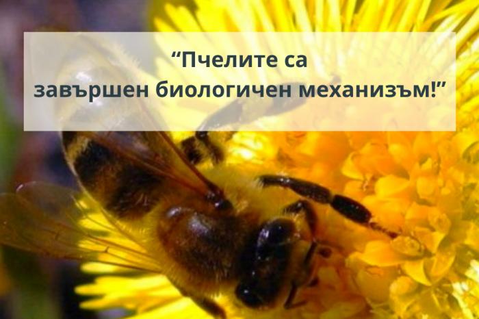 """""""Пчелите са завършен биологичен механизъм!"""""""