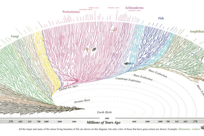 Една от еволюционните теории на Дарвин вече e доказана