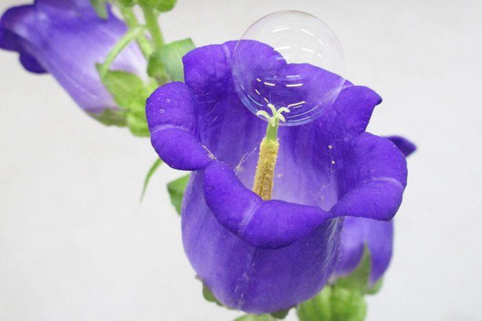 Доставени с дрон сапунени мехурчета могат да помогнат за опрашването на цветя