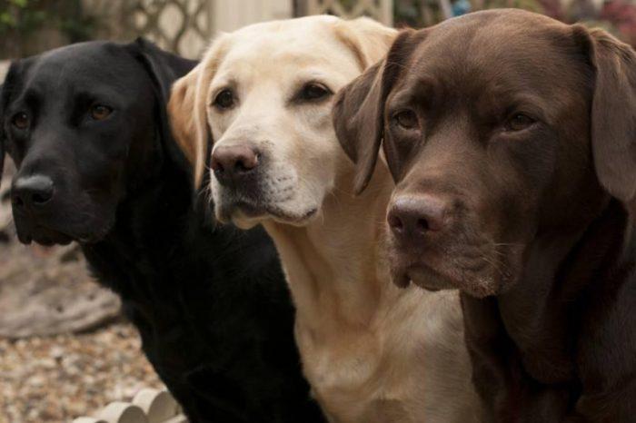 Изчисляването на възрастта на куче  в човешки години е по-трудно, отколкото смятате
