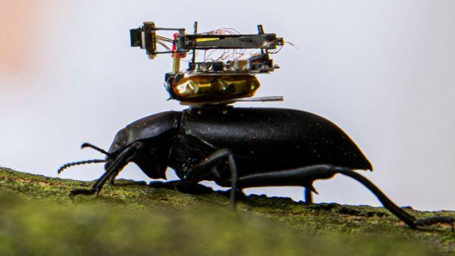 Камера, монтирана на бръмбар, предава наживо приключенията му