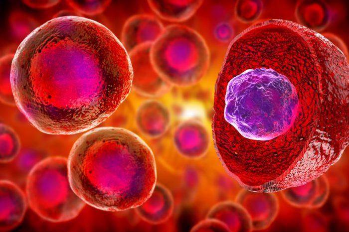 TRANSTEM: катедра ERA - биологията на транслационните стволови клетки