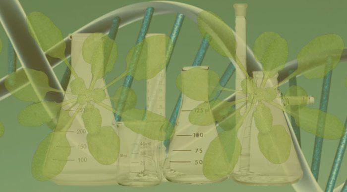 Създаване на Център за биология и биотехнология на растителните системи и за превод на фундаментални изследвания на устойчиви био базирани технологии в България