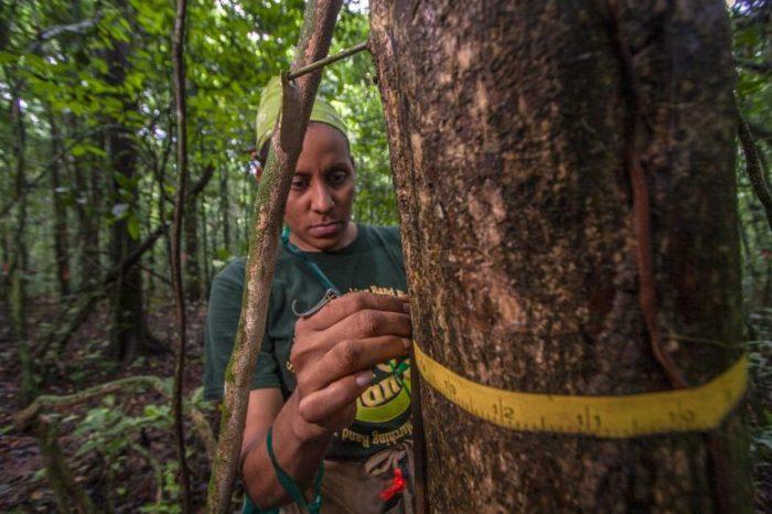 Дългогодишните тропически дървета играят много по-голяма роля в поемането на СО2, отколкото се смяташе досега
