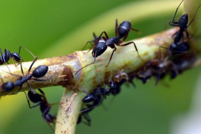 Мравките могат да ни помогнат да преборим бъдещи пандемии