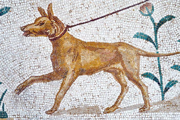 Оказва се, че археологическите находища са пълни с древни кучешки екскременти