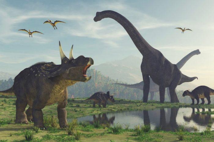 Проучване хвърля светлина върху еволюцията на най-ранните динозаври
