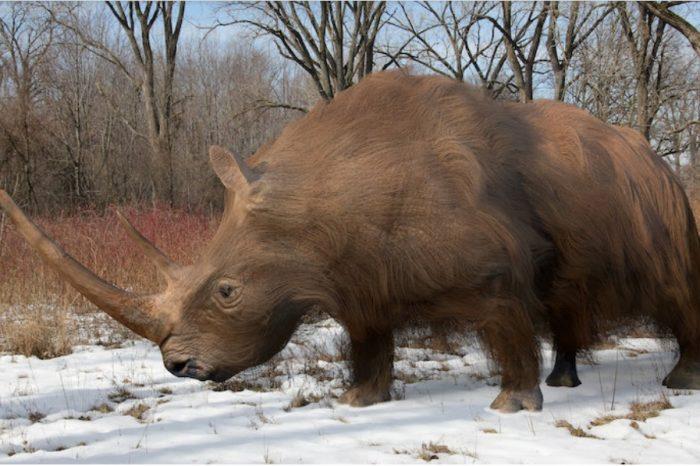 Древните геноми разкриват, че вълнестите носорози са изчезнали поради климатичните промени, а не поради ловуването